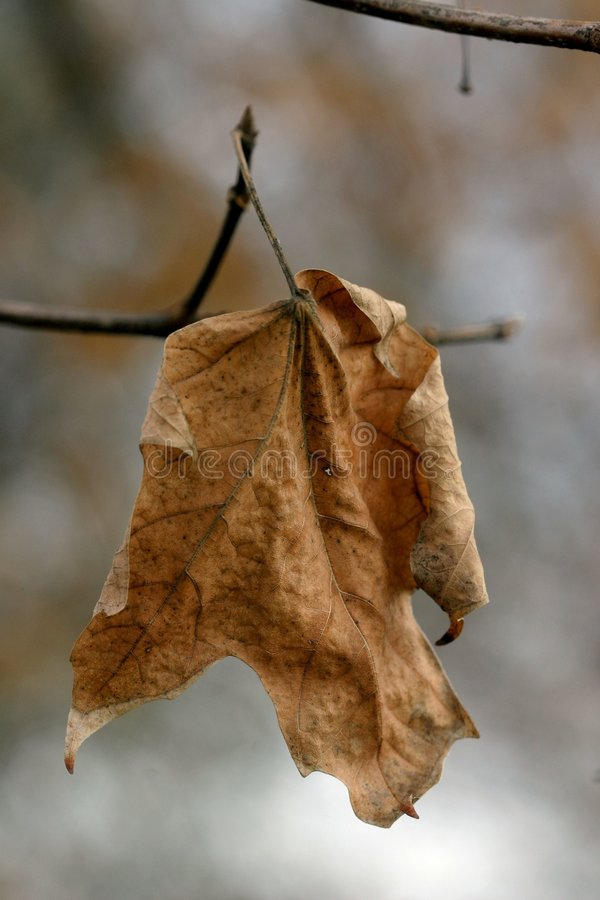 νεκρό φύλλο στοκ εικόνες
