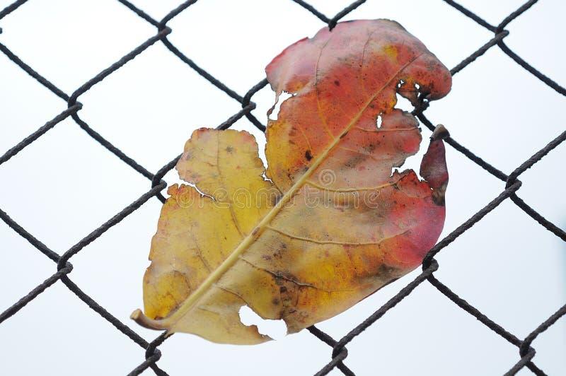 νεκρό φύλλο στοκ φωτογραφίες με δικαίωμα ελεύθερης χρήσης