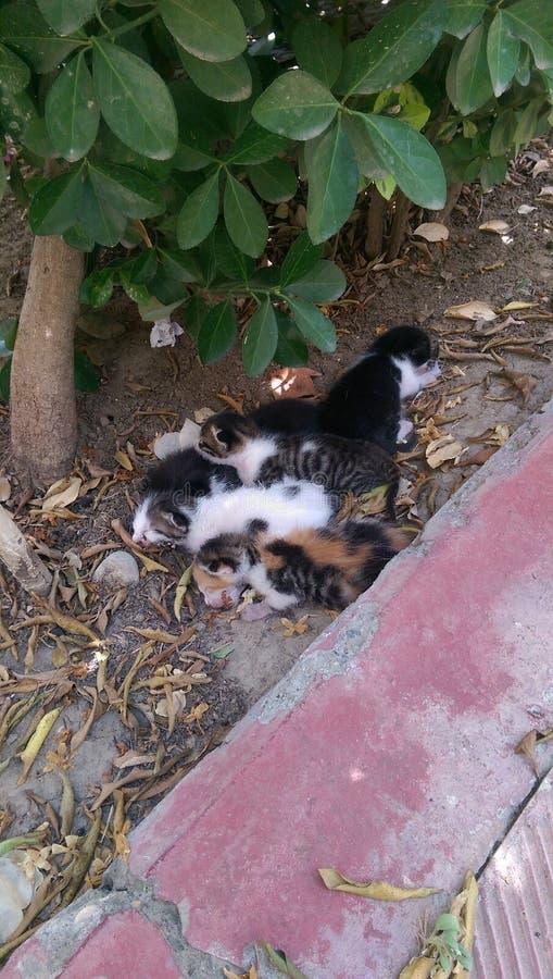 Νεογέννητα γατάκια όλα που στηρίζονται από κοινού στοκ φωτογραφία