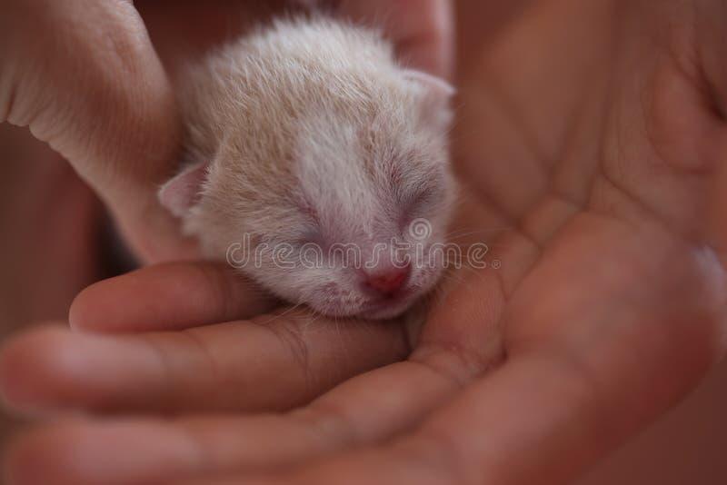 Νεογέννητο γατάκι στην παλάμη του χεριού σας στοκ φωτογραφία με δικαίωμα ελεύθερης χρήσης