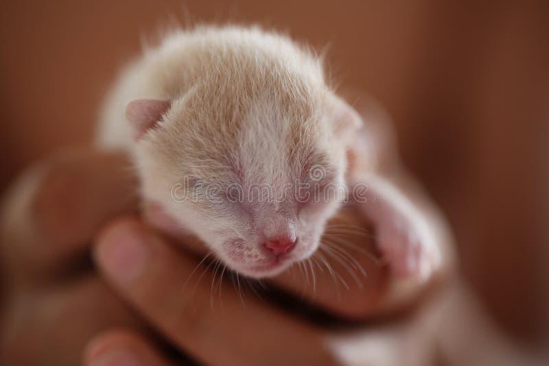 Νεογέννητο γατάκι στην παλάμη του χεριού σας στοκ φωτογραφία