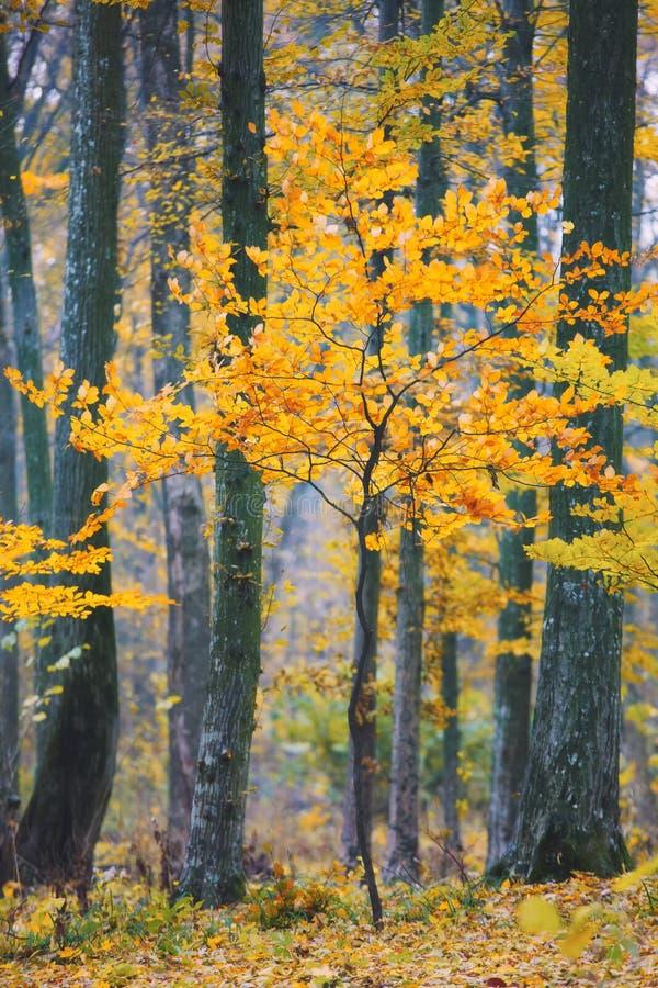 νεολαίες δέντρων φυλλώμ&alph στοκ φωτογραφία με δικαίωμα ελεύθερης χρήσης