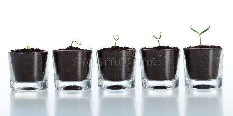 νεολαίες φυτών ανάπτυξης εξέλιξης στοκ εικόνες με δικαίωμα ελεύθερης χρήσης