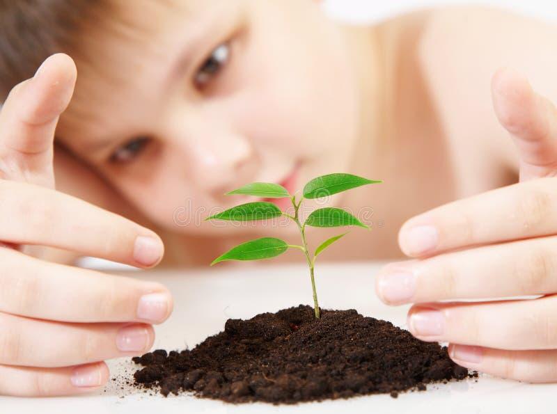 νεολαίες φυτών διαγωνι&sigm στοκ εικόνα με δικαίωμα ελεύθερης χρήσης