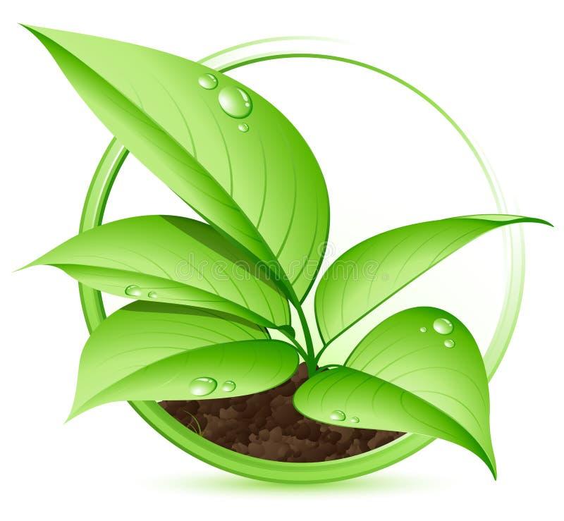 νεολαίες φυτών διανυσματική απεικόνιση