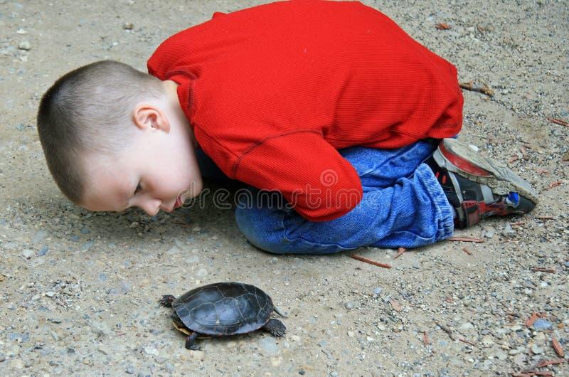 νεολαίες χελωνών αγοριώ στοκ φωτογραφίες