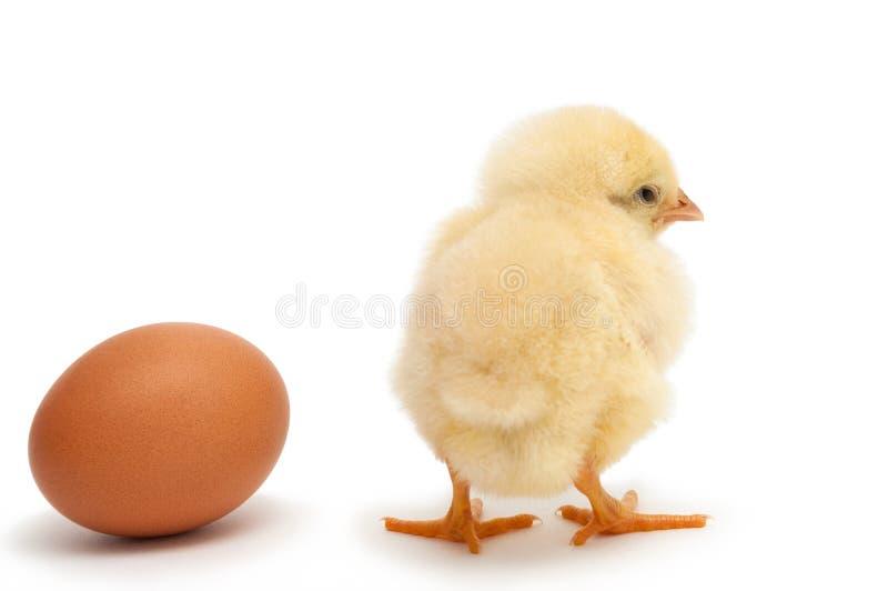 Νεοσσός που στέκεται πλησίον στο αυγό στοκ εικόνες με δικαίωμα ελεύθερης χρήσης