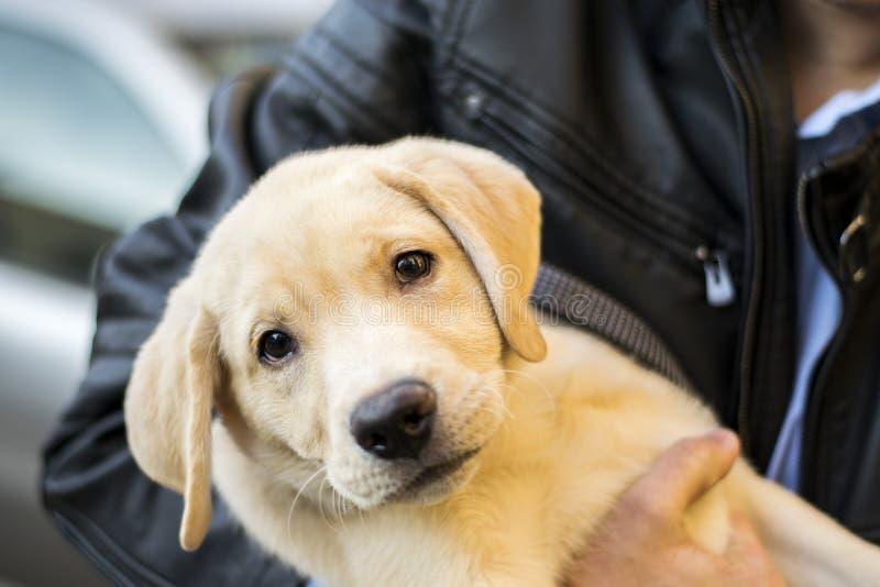 νεολαίες σκυλιών στοκ φωτογραφίες