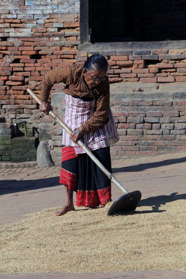 Νεπαλική κυρία, που χωρίζει το ρύζι στοκ εικόνες