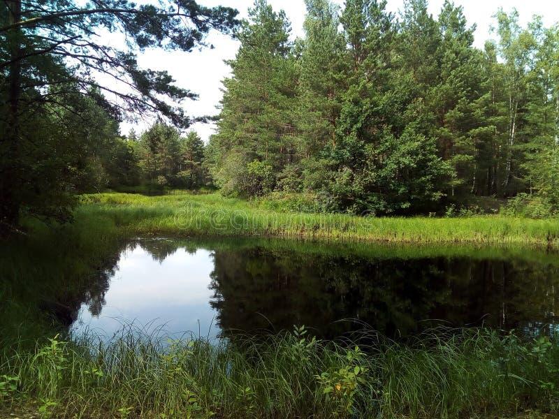 νερό, λίμνη, τοπίο, φύση, ποταμός, ουρανός, αντανάκλαση, δέντρο, δάσος, καλοκαίρι στοκ εικόνες με δικαίωμα ελεύθερης χρήσης