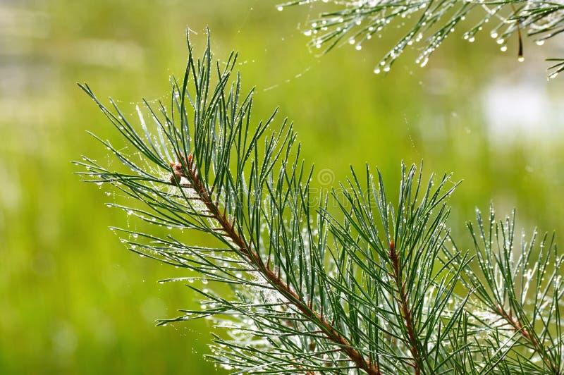Νερό στον κλάδο δέντρων στοκ φωτογραφία με δικαίωμα ελεύθερης χρήσης