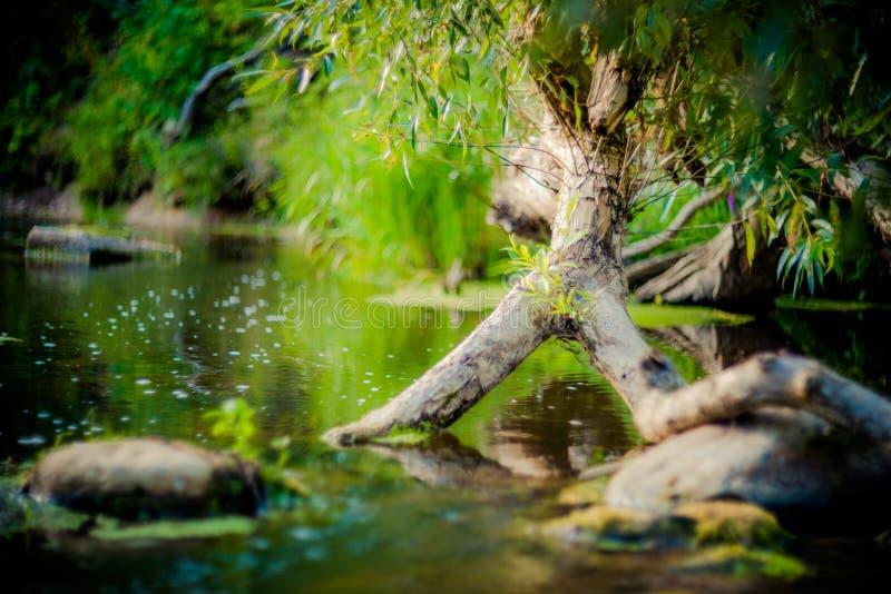 Νερό στο δάσος στοκ φωτογραφία με δικαίωμα ελεύθερης χρήσης