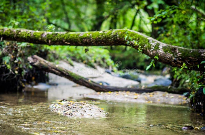 Νερό στο δάσος στοκ εικόνες