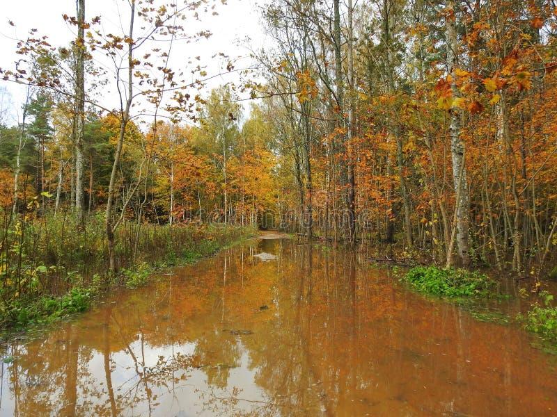 Νερό στο δρόμο και τα ζωηρόχρωμα δέντρα φθινοπώρου, Λιθουανία στοκ εικόνα με δικαίωμα ελεύθερης χρήσης