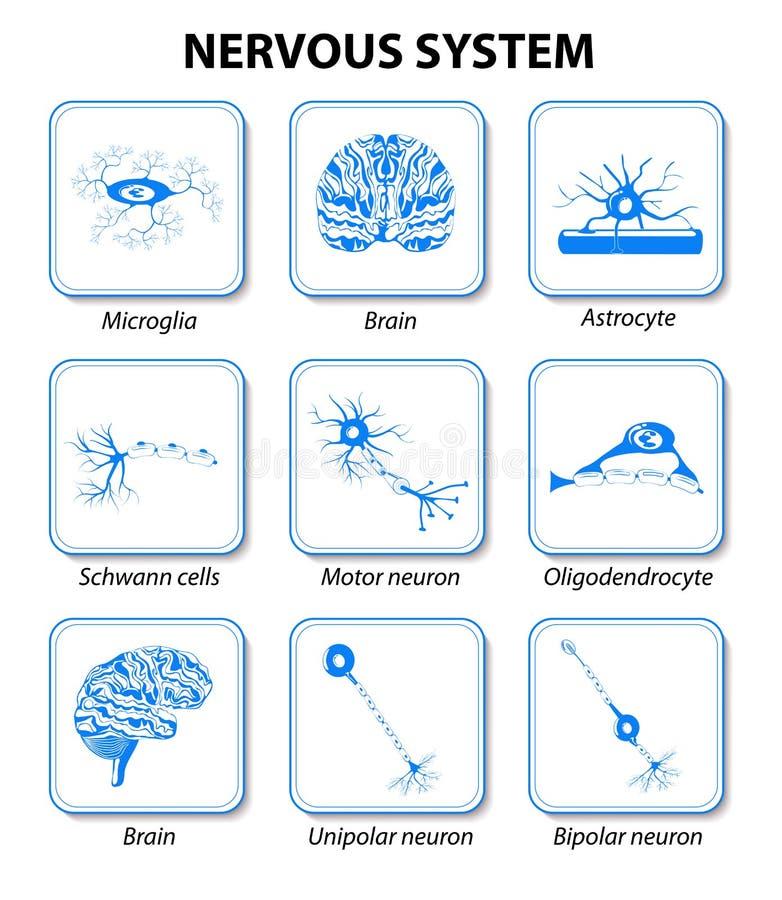 Νευρικό σύστημα εικονίδια που τίθενται ελεύθερη απεικόνιση δικαιώματος