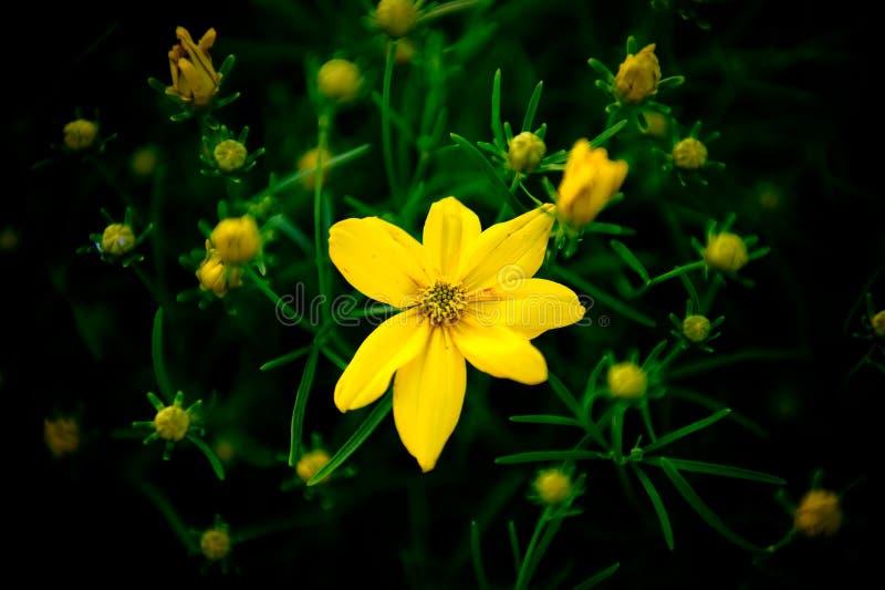 νεφέλωμα λουλουδιών στοκ φωτογραφίες με δικαίωμα ελεύθερης χρήσης