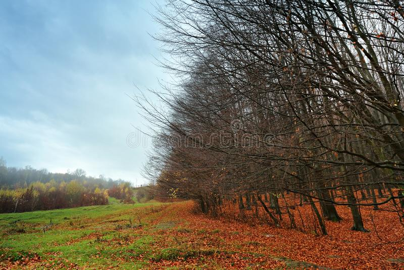 Νεφελώδες τοπίο φθινοπώρου βουνών με το ζωηρόχρωμο δάσος στοκ εικόνα με δικαίωμα ελεύθερης χρήσης