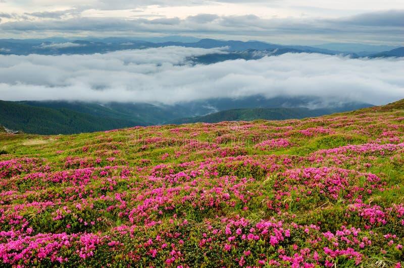 νεφελώδης άνοιξη ουρανού τοπίων λουλουδιών στοκ εικόνες με δικαίωμα ελεύθερης χρήσης