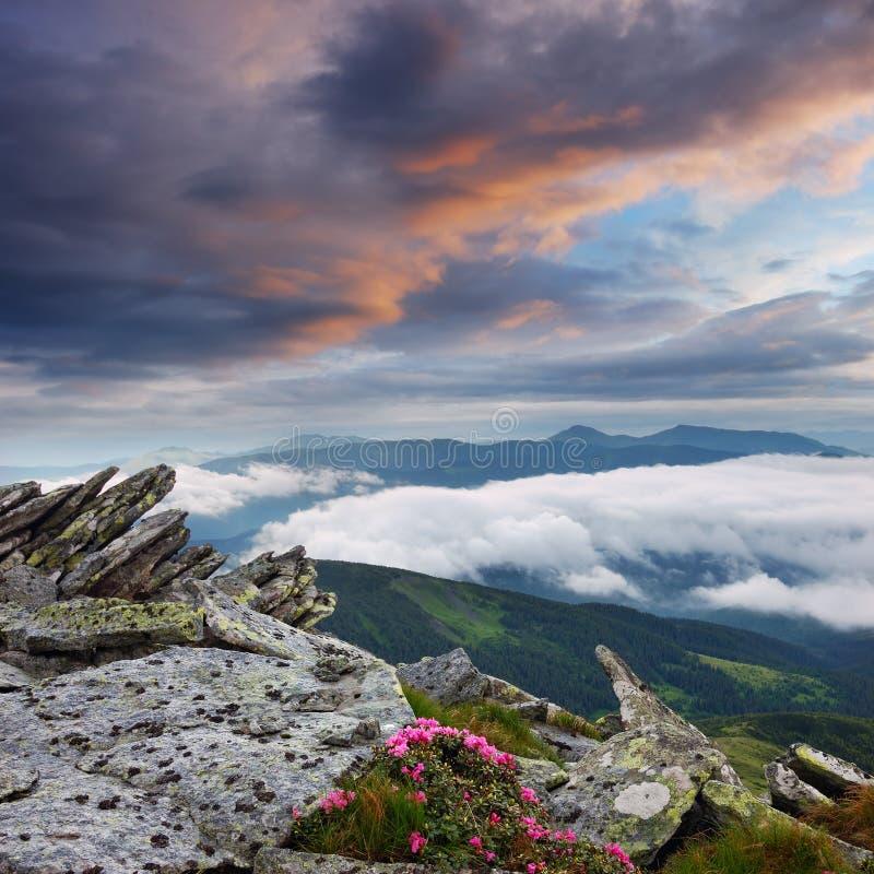 νεφελώδης άνοιξη ουρανού τοπίων λουλουδιών στοκ φωτογραφίες με δικαίωμα ελεύθερης χρήσης