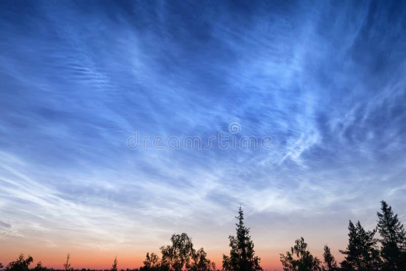 Νεφελώδης ουρανός νύχτας πέρα από το βαθύ δάσος στοκ φωτογραφίες με δικαίωμα ελεύθερης χρήσης