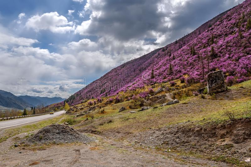 Νεφελώδης rhododendron οδικών βουνών άσφαλτος στοκ φωτογραφία με δικαίωμα ελεύθερης χρήσης