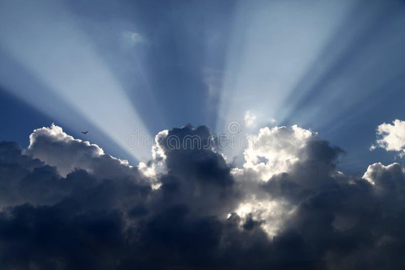 Νεφελώδης ουρανός, ηλιοφάνεια και seagull στοκ εικόνα