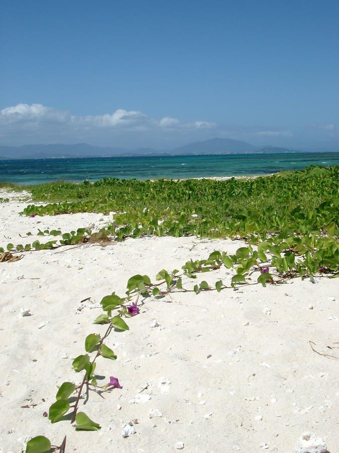 νησί λουλουδιών τροπικό στοκ εικόνα
