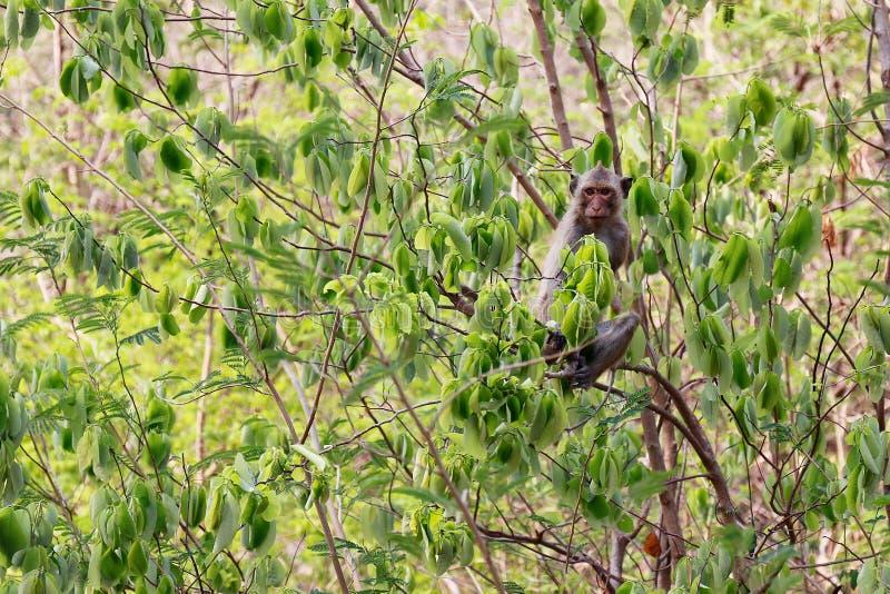 Νησί πιθήκων στα δέντρα στα άγρια τροπικά τροπικά δάση στοκ εικόνες με δικαίωμα ελεύθερης χρήσης