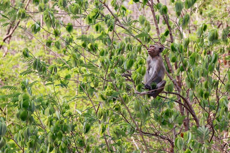 Νησί πιθήκων στα δέντρα στα άγρια τροπικά τροπικά δάση στοκ φωτογραφίες με δικαίωμα ελεύθερης χρήσης