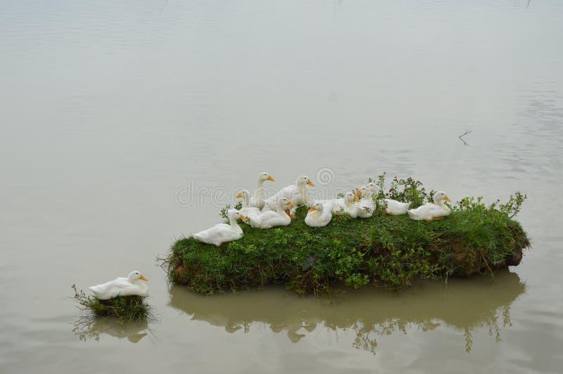 Νησί Ducky στοκ φωτογραφίες με δικαίωμα ελεύθερης χρήσης
