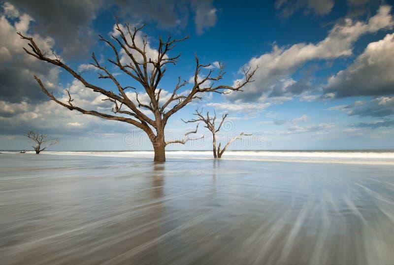 νησί edisto του Τσάρλεστον βοτανικής παραλιών κόλπων boneyard στοκ φωτογραφία με δικαίωμα ελεύθερης χρήσης