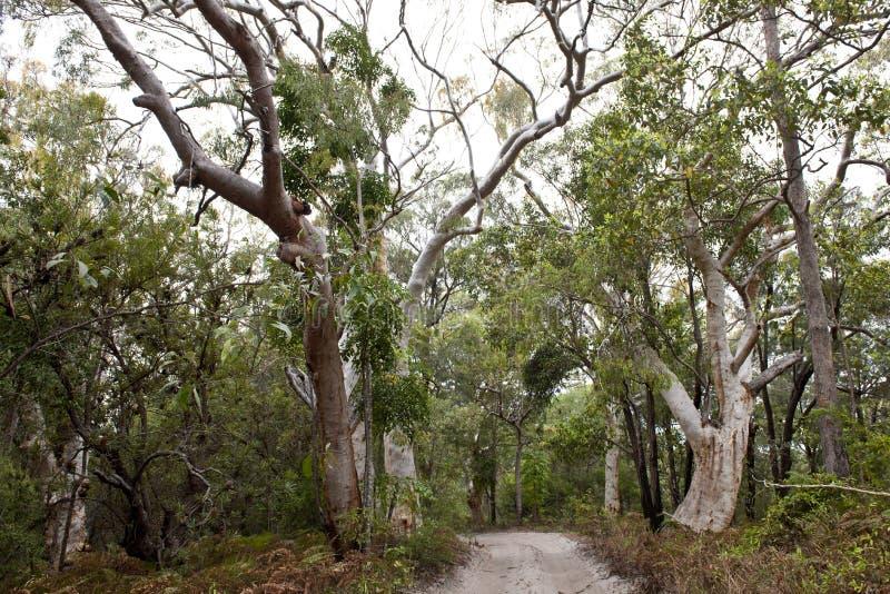 Νησί Fraser δασών ζουγκλών, Αυστραλία στοκ εικόνες με δικαίωμα ελεύθερης χρήσης