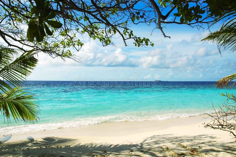 νησί maldivian παραλιών στοκ φωτογραφία