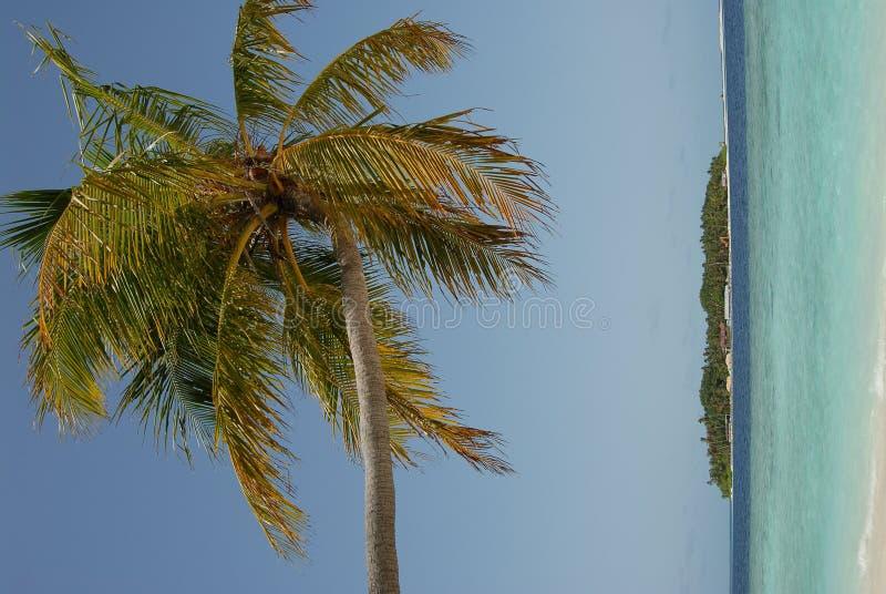 νησί maldivian στοκ εικόνες με δικαίωμα ελεύθερης χρήσης