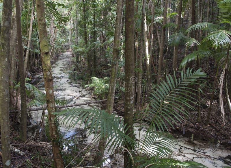 Νησί Queensland Fraser στοκ φωτογραφίες