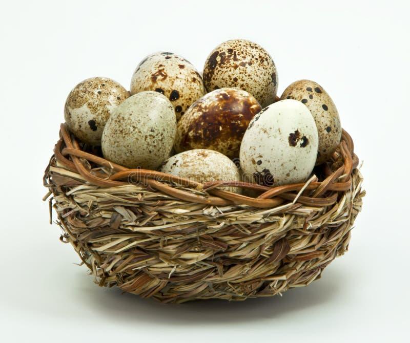 νησοπέρδικες αυγών καλ&alpha στοκ φωτογραφία