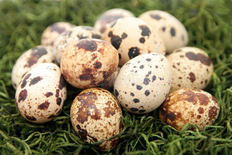 Download νησοπέρδικες αυγών στοκ εικόνα. εικόνα από ιδέα, χλόη, ornithology - 525279