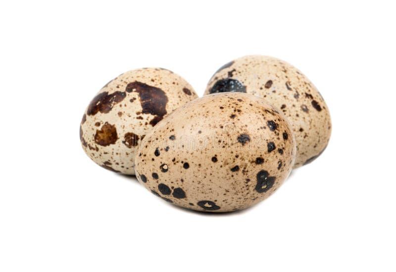 νησοπέρδικες τρία αυγών στοκ φωτογραφίες