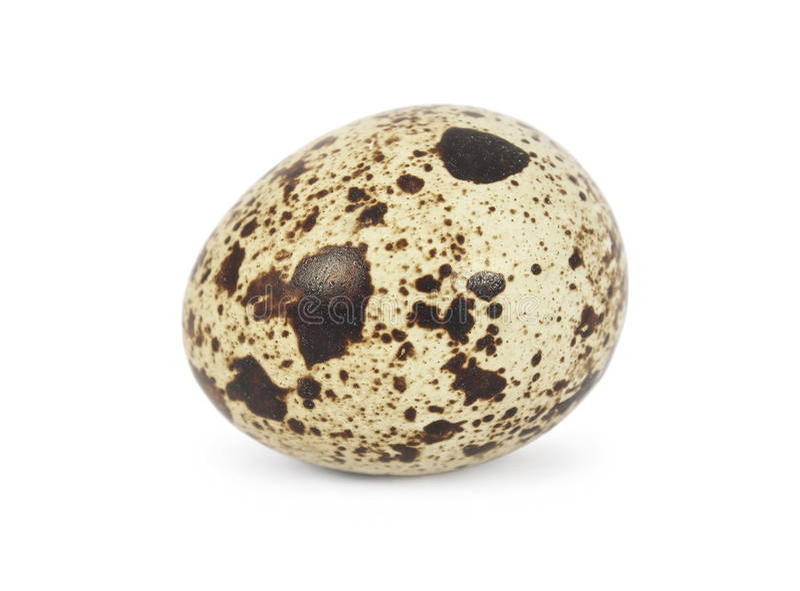 Νησοπέρδικες egg στοκ φωτογραφία