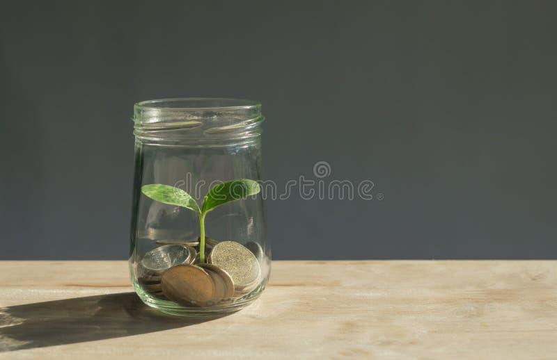 Νομίσματα στο βάζο γυαλιού με τις νέες εγκαταστάσεις δευτερεύουσες σε το που μεγαλώνει από το τ στοκ εικόνες με δικαίωμα ελεύθερης χρήσης