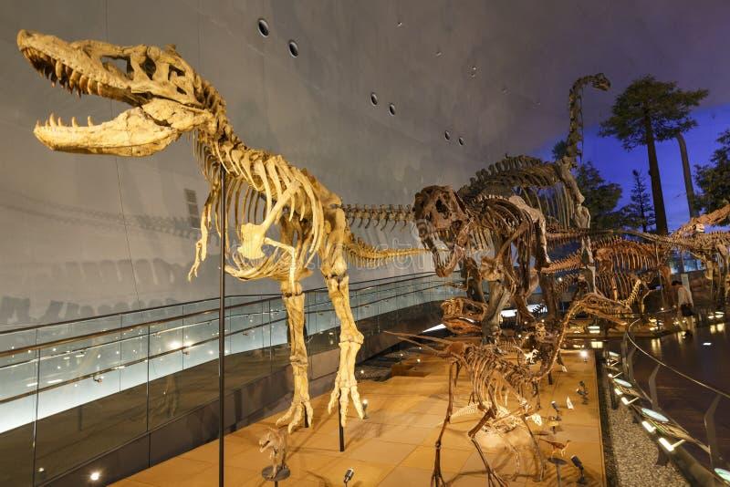 Νομαρχιακό μουσείο δεινοσαύρων του Φουκούι στοκ φωτογραφία
