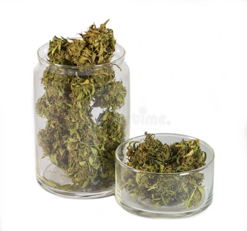 Νομική ιατρική μαριχουάνα στοκ φωτογραφία με δικαίωμα ελεύθερης χρήσης