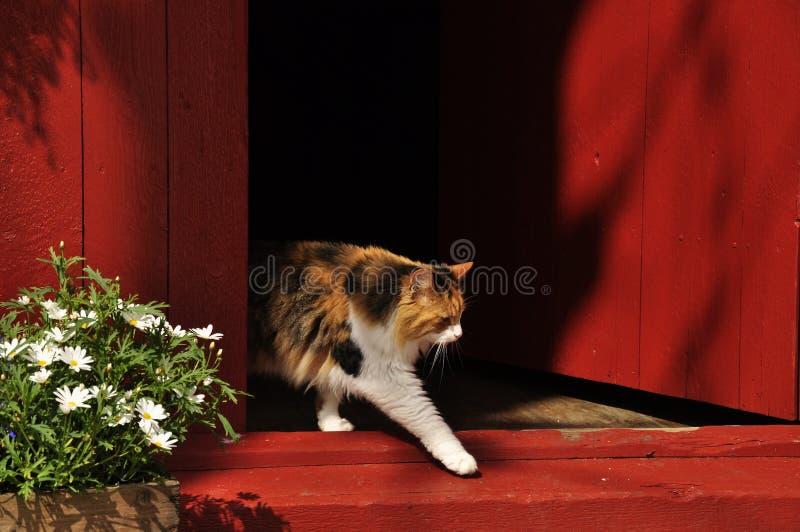 Νορβηγική γάτα στοκ εικόνα