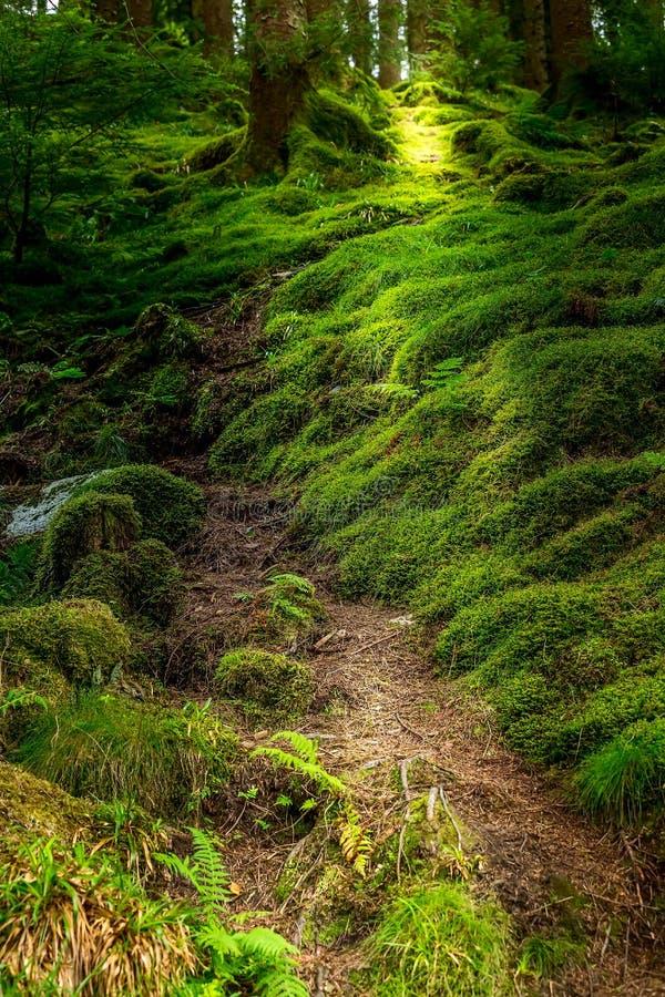 Νορβηγική troll μυστήρια δασική διάβαση στοκ εικόνες