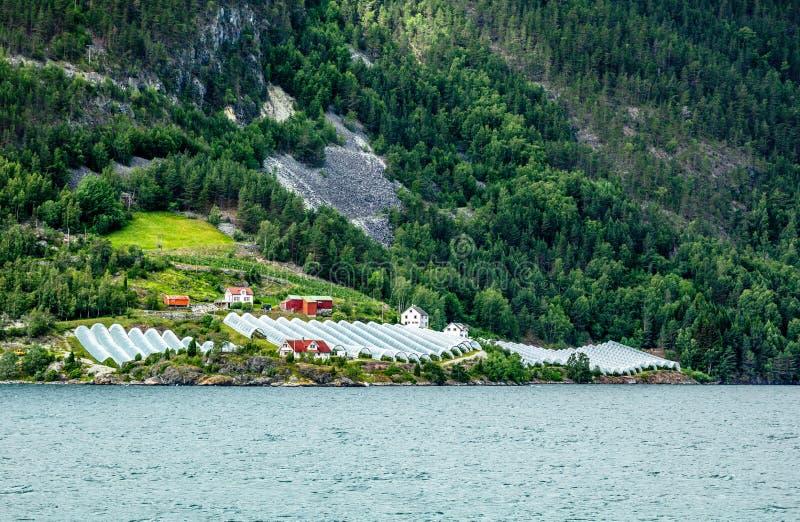Νορβηγικό γεωργικό αγρόκτημα με τα θερμοκήπια στο λόφο στο φιορδ Naeroy, Aurlan, νομός Sogn og Fjordane, Νορβηγία στοκ φωτογραφίες