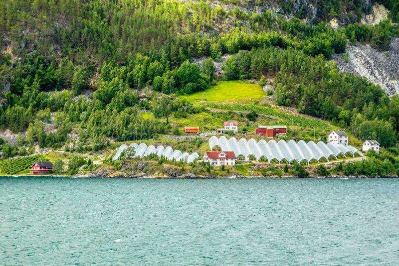 Νορβηγικό γεωργικό αγρόκτημα με τα θερμοκήπια στο λόφο στο φιορδ Naeroy, Aurlan, νομός Sogn og Fjordane, Νορβηγία στοκ φωτογραφίες με δικαίωμα ελεύθερης χρήσης