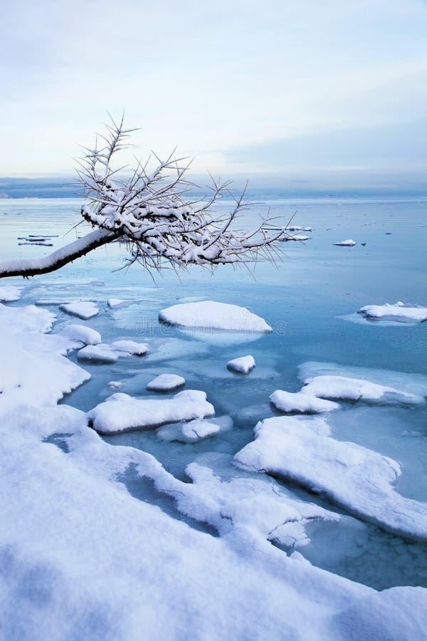 Νορβηγικό τοπίο χειμερινών φιορδ με το δέντρο και τον πάγο στοκ εικόνες