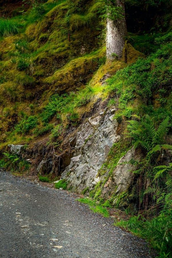 Νορβηγικό troll μυστήριο δάσος στοκ φωτογραφία με δικαίωμα ελεύθερης χρήσης