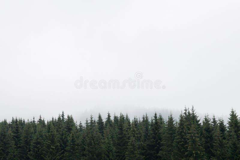 Νοσταλγικό κωνοφόρο δάσος με τις κορυφές δέντρων έλατων και αγριόπευκων ενάντια στο misty ουρανό Διάστημα αντιγράφων για το κείμε στοκ φωτογραφία