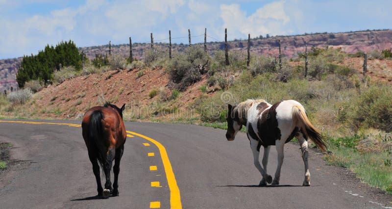 Νοτιοδυτικό τοπίο με τα άλογα στοκ εικόνες με δικαίωμα ελεύθερης χρήσης